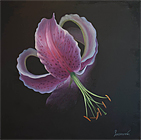 ''Lily''.