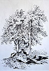 ''Tree''. Bunina Anastasiya. Drawings