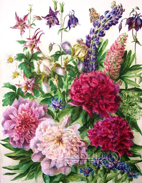 'Garden peonies'. Gazarova Larisa