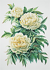 Original oil paintings