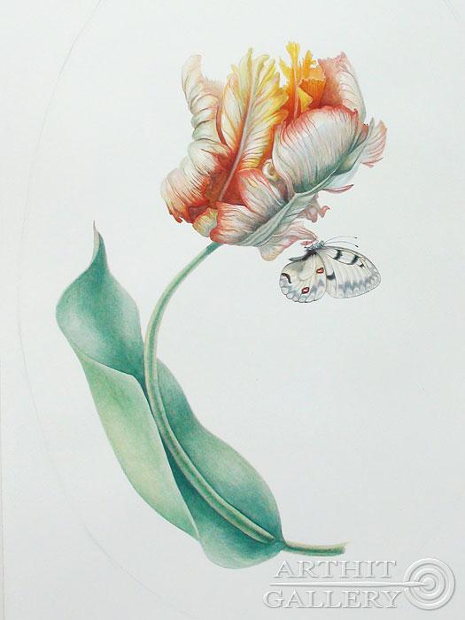 ''Абрикосовый попугайчиковый тюльпан 1''.  Ярмиш Мария. Продажа картин, предметов декоративно-прикладного искусства