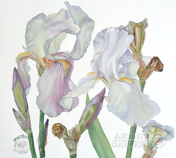 'Pearl irises'. Kaliberda Elena