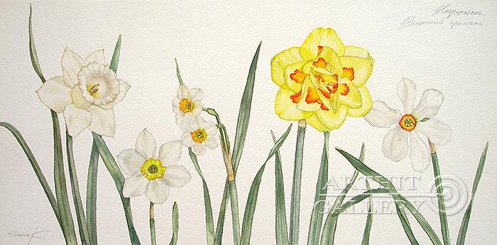 ''Нарциссы. Весенний аромат''.  Калиберда Елена. Продажа картин, предметов декоративно-прикладного искусства