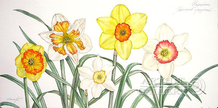 ''Нарциссы. Весенний праздник''.  Калиберда Елена. Продажа картин, предметов декоративно-прикладного искусства