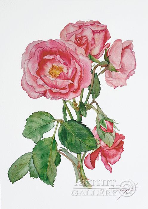 ''Плетистая роза''.  Калиберда Елена. Продажа картин, предметов декоративно-прикладного искусства